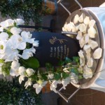 Urne Orchideen