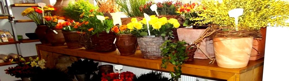 Blumen Vishers | Schiess-Str. 16 | 40549 Düsseldorf | Gestecke | Handsträuße | Kränze | Hochzeiten | Terrassen | Hydrokultur | Grabpflege | Friedhofsgärtnerei | Trauer | Veranstaltungen | Dekorationen | Bukets | Teichanlagen | Sonntag